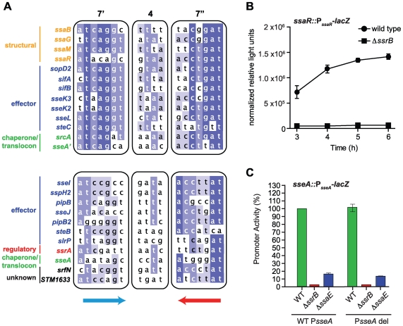 Genome-wide identification of SsrB palindrome sequences. (A) A position weight matrix was generated from all naturally-evolved palindromes in SPI-2 and used to search the genome for similar sequences. Palindromes identified in regulatory <t>DNA</t> that co-occurred with ChIP peaks upstream of SsrB-regulated genes were selected, aligned and binned according to those scoring > 0.8 against the position weight matrix (top box) and those scoring between 0.7–0.8 (lower box). The left (7′) and right (7″) heptamers and the 4-bp spacer are displayed as a heat-map to show bases of high conservation (dark blue) from degenerate regions (light blue/white). The genes controlled by these promoters are indicated to the left of the sequences and coloured according to function: structural components of the T3SS (orange), effectors (blue), regulatory elements (red), T3SS chaperones and translocon (green), and SsrB-regulated genes of unknown function (black). (B) The high-scoring palindrome in the ssaR IGR is functional. A single-copy ssaR reporter was integrated on the chromosome and tested for functional activity in wild-type cells and in Δ ssrB . Promoter activity is shown as the mean with standard error from three separate experiments. (C) Functional validation of the intragenic high-scoring palindrome in the ssaE coding sequence. A single-copy transcriptional reporter that either contained (WT P <t>sseA</t> ) or lacked (P sseA del) the single heptamer site in the sseA IGR was integrated on the chromosome in wild-type cells, or mutants lacking either ssrB or the ssaE coding sequence that removed the high-scoring intragenic palindrome (P sseA '). Transcriptional activity at 6 h is shown as the mean of triplicate determinations with standard error.