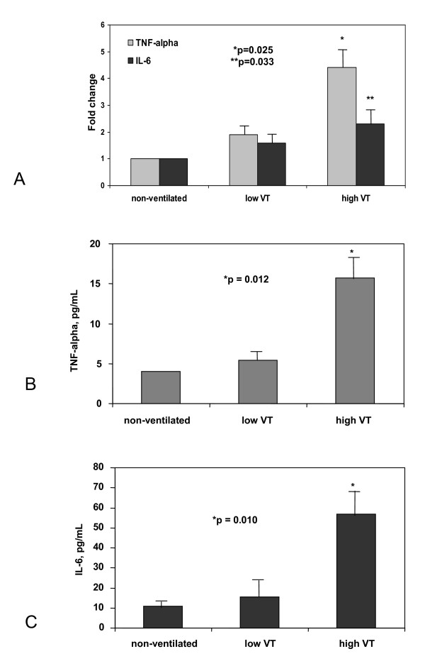 A) Fold changes of TNF-α and IL6 mRNA levels in the lungs of healthy rats after 4 hours of spontaneous breathing (non-ventilated), and on mechanical ventilation with 6 ml/kg (low V T ), 20 ml/kg (high V T ) . Bars represent the median of six rats per group. *p = 0.025 when compared to low V T ; **p = 0.033 when compared to spontaneous breathing animals. B and C) Effects of 4 hours of spontaneous breathing in non-ventilated, anesthetized animals and of 4 hours of mechanical ventilation with low V T (B) and high V T ( C ) on systemic protein levels of TNF-α and IL-6. Bars represent the mean values of 6 rats per group.