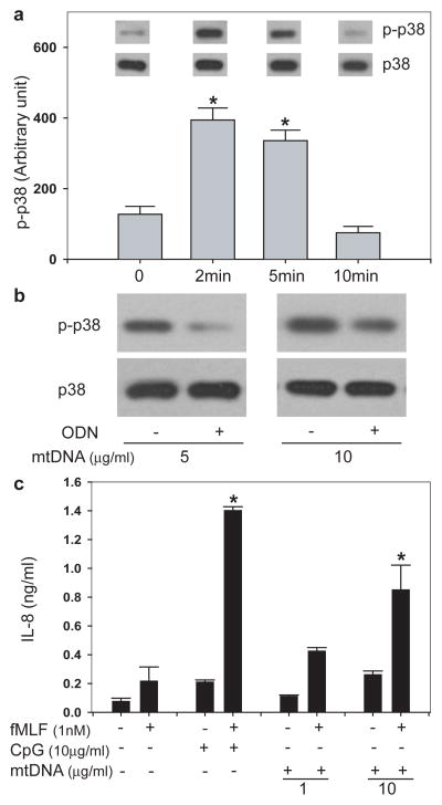 mtDNA activates PMN via CpG/TLR9 interactions a, Incubation of PMN (10 6 ) with 1μg/ml mtDNA activates p38 MAPK (n=3, *p