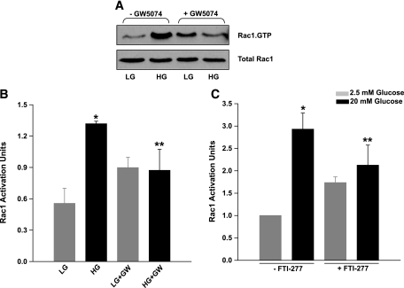 Inhibition of Raf-1 kinase or FTase markedly attenuates glucose-induced activation of Rac1 in INS 832/13 cells. INS 832/13 cells were cultured overnight in low-serum, low-glucose media with either diluent alone or GW-5074 (10 μmol/l) as indicated in the figure. The cells were then incubated further (30 min) in the presence of either low (5 mmol/l) or high (20 mmol/l) glucose in the continuous presence of GW-5074 or diluent. The degree of Rac1 activation was determined by PAK/PBD pull-down assay. A : A representative blot from four independent experiments yielding similar results. B : Densitometric analysis of the ratio of total Rac1 and Rac1.GTP. Data are mean ± SEM from four determinations in each case. * P