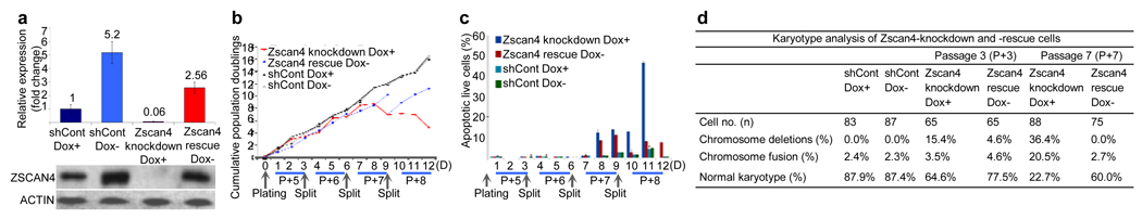 Characterization of Zscan4 knockdown cells a , Confirmation of Zscan4 knockdown and rescue by qPCR analysis using a common primer for all Zscan4 paralogs (top) and Western blot analysis (bottom). Cells were cultured for 3 days in Dox+ or Dox− conditions. shCont (control shRNA in the same parental cells) was used to exclude off-target effects. See Supplementary Fig 7 and 8 for additional controls. b , Reduction of proliferation by Zscan4 knockdown, until cells died abruptly at passage 8 (P+8). Rescue improved proliferation. Assays were done in triplicate in four independent experiments. c , Annexin-V Apoptosis assay performed by flow <t>cytometry.</t> d , Karyotype deterioration seen after Zscan4 knockdown.