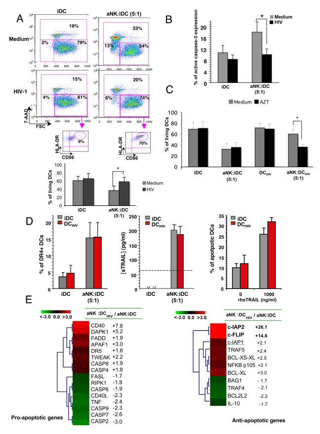 HIV-infected iDCs are resistant to NK-mediated killing. ( A ) iDCs were either uninfected or infected for 24 hours with R5-HIV-1 BaL (1 ng/ml of p24), and further incubated for 24 hours with aNK cells at NK∶DC ratio of 5∶1. Viability of iDCs was assessed using the 7-AAD assay. Living DCs are identified as CD56 neg 7-AAD neg FSC high . Inserts: the maturation stage of DCs was determined via the dual staining of gated living DCs with anti-CD86 and -HLA-DR specific antibodies. Dot plots show one representative out of more than ten independent experiments. Histograms show the mean ± sd of experiments performed with cells from 10 healthy donors. * p = 0.0001. ( B ) Intracellular active <t>caspase-3</t> detection by flow cytometry in iDC and DC HIV cultured alone, or cocultured with aNK cells for 24 hours. Data represent the mean ± sd of three independent experiments. * p
