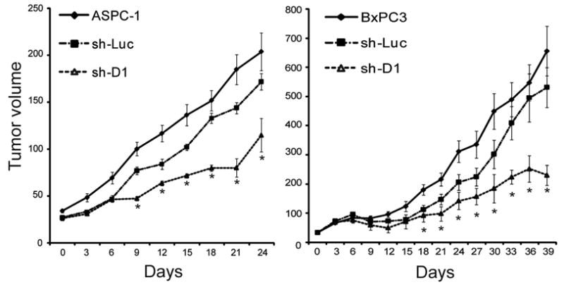 Effects of cyclin D1-directed shRNA on tumor growth ASPC-1 or BxPC3 cells were injected subcutaneously in athymic nude mice. After tumors reached a volume of 30–40 mm 3 , they were either injected with buffer (ASPC-1) or with luciferase-directed (sh-Luc) or cyclin D1-directed (sh-D1) shRNA-lentiviruses. Tumor volumes were calculated in mm 3 as described in the Methods section. Data are expressed as means ± SEM from 8 mice in each group at each time point. *p
