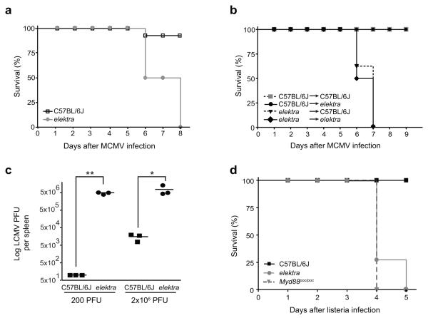 Homozygous elektra mutants are highly susceptible to MCMV, LCMV and L. monocytogenes infections (a) Survival curves for WT ( n =8) and homozygous elektra mutants ( n =8) upon challenge with 2 × 10 5 PFU of MCMV. Results are representative of five independent experiments. (b) Survival curves upon infection with 2 × 10 5 PFU of MCMV after reciprocal bone marrow transplantation. Recipient mice were reconstituted with 5 × 10 6 bone marrow cells 1 day after 10-Gy dose of irradiation. Congenic C57BL/6.SJL ( Ptprc a Pep3 b ; Ly5.1 + ), C57BL/6J ( Ptprc b Pep3 a ; Ly5.2 + ) WT or elektra mutant mice were used as both recipients and donors as indicated in the figure. C57BL/6J into C57BL/6J, n =3; C57BL/6J into elektra , n =6; elektra into C57BL/6J, n =6; elektra into elektra , n =3. Results are representative of 2 independent experiments. (c) WT and homozygous elektra mice (3 mice in each group) were i.v. injected with either 200 or 2 × 10 6 PFU of LCMV (Armstrong strain). Viral load was measured in spleens 7 days after injection. Results are representative of two independent experiments. ** P