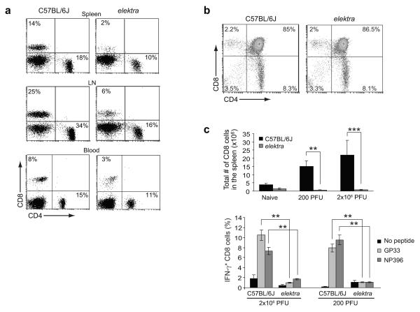 Defect in peripheral T cells in  elektra  homozygotes (a)  Cells from spleen, lymph node (LN), and blood of WT or homozygous  elektra  mice were analyzed by flow cytometry for CD4 and CD8 expression.  (b)  Thymocytes from WT or homozygous  elektra  mice were analyzed by flow cytometry for CD4 and CD8 expression. For  a  and  b , results are representative of 10 mice per genotype.  (c)  WT and homozygous  elektra  mice were i.v. injected with either 200 or 2 × 10 6  PFU of LCMV (Armstrong strain). Splenocytes were isolated 7 days post-injection and restimulated  ex vivo  with either GP33 or NP396, peptides derived from LCMV, in the presence of Brefeldin A. Total numbers of CD8 +  splenocytes were determined by flow cytometry (top). CD8 +  cells were then fixed, permeabilized, and stained for intracellular IFN-γ expression (bottom).  n =3 mice of each genotype per condition. Results are representative of 2 independent experiments. ***  P