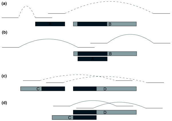 Mis-assembled <t>DCC</t> and DOC . Assemblers may mistakenly form two contigs from the two haplotypes, as shown in (a) where <t>contig</t> A contains heterozygous sequence and contig B contains homozygous sequence (light) on both sides of a matching heterozygous region (dark) (with sequencing reads as lines above them). We refer to A as a duplicated contained contig (DCC). We can identify this situation by finding an alignment between contigs A and B that completely covers contig A and comparing contig A's mate pair links in the original location to those same links when contig A is overlaid on contig B at the location of its alignment, as shown in (b) . Dashed curves in (a) indicate distances that are significantly shorter (left side of figure) or longer (right) than expected; solid curves indicate distances that are consistent with specifications. In the situation shown here, we would designate contig A as an erroneous duplication likely to have been caused by haplotype differences. Alternatively, heterozygous sequence may be separated into two contigs that each include some homozygous sequence on opposite ends, as in contigs C and D in (c) , which we refer to as duplicated overlapping contigs. If a significant alignment exists between the ends of these contigs and the distances between mate pairs pointing right from contig C and left from contig D better match their expected fragment sizes when the contigs are joined, we designate the region as an erroneous duplication and join the contigs as in (d) .