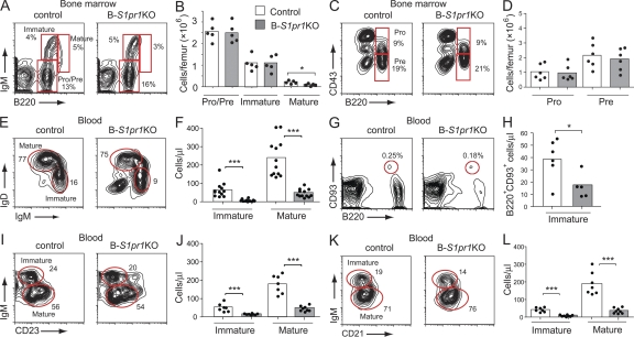 Reduced numbers of mature and immature B cells in the blood of B- S1pr1 KO mice. (A–D) Bone marrow B cell subpopulations from control and B- S1pr1 KO mice were analyzed by flow cytometry using FITC-conjugated anti-B220, APC-conjugated anti-IgM, and PE-conjugated anti-CD43 antibodies. Pro–/pre–B cells were identified as B220 low IgM − , immature B cells were identified as B220 low IgM + , and mature B cells were identified as B220 high IgM + . Pro–B cells were identified as B220 low IgM − CD43 + and pre–B cells were identified as B220 low IgM − CD43 − . Results are shown as density plots (A and C) and as the absolute number of cells counted per femur (B and D). The percentage of cells in each gate is indicated on the plots. Bars represent mean values of pooled data from two experiments, and the closed circles are individual mice. *, P