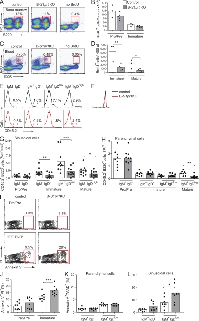 Immature B cells in the bone marrow do not efficiently enter blood and have elevated apoptosis in the absence of S1P1 receptor. (A–D) Mice were pulsed with BrdU, and B cells from the bone marrow (A and B) and peripheral blood (C and D) of control and B- S1pr1 KO mice were analyzed by flow cytometry using anti-B220, anti-IgD, and anti-IgM antibodies in combination with BrdU detection methodology, as described in Materials and methods. Results are shown as dot plots (A and C), and as absolute numbers of BrdU + B220 low IgM − (pro–/pre–) and B220 low IgM + (immature) B cells per femur (B) and BrdU + B220 + IgD low IgM high (immature) and B220 + IgD high IgM low (mature) B cells per 400 µl of blood (D). The percentage of cells in each gate is indicated on the plots. Bars represent mean values, and the closed circles are individual mice. Data are representative of three experiments with three to five mice of each genotype per experiment. *, P