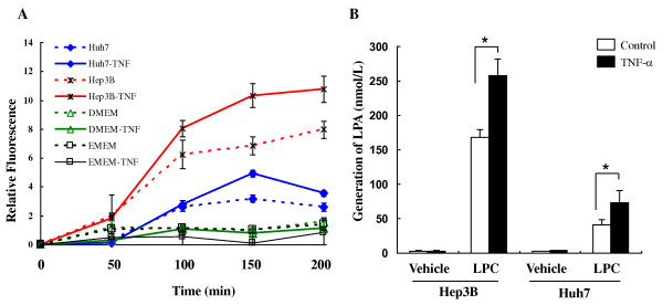Up-regulation of ATX induced by TNF-α is associated with increased lysophospholipase D (lyso-PLD) activity by conversion of LPC into LPA in Hep3B and Huh7 cells . Serum starved Hep3B or Huh7 cells were treated with TNF-α (10 ng/ml) or vehicle (0.1%BSA/PBS) for 20 hours. A . Conditioned media (CM) or control media (DMEM or EMEM) were concentrated (40-fold) and assayed for ATX activity using the FS-3 compound. The results are shown as the average of relative fluorescence activity ± SD from three experiments. B . CM were incubated with 15 μM LPC (18:1) for 3 hours at 37°C. Lipids were analyzed by liquid chromatography-mass spectrometry (LC-MS). Results are level of LPA (18:1) from three experiments and presented as mean ± SD. *, P