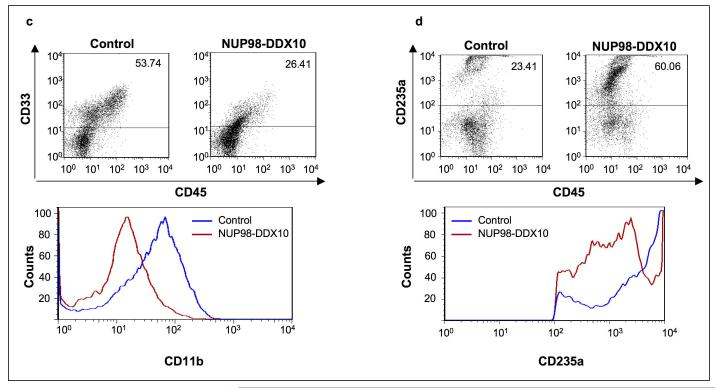 NUP98-DDX10 disrupts myeloid and erythroid differentiation of primary human CD34+ cells. Human CD34+ cells were retrovirally transduced with either control MSCV-IRES-GFP vector or vector expressing NUP98-DDX10, and cells were sorted for GFP positivity. ( a ) One thousand cells were seeded into each of two duplicate plates for CFC assay and the experiment was repeated 6 independent times. Representative plates without magnification (upper panels) and low power photomicrographs of representative erythroid colonies (middle panels) are shown. Cytospin smears were prepared from the CFC plates and stained with Giemsa (lower panels). Photomicrographs were taken from representative fields with a 60X oil objective. Representative cells are indicated by arrows. B: blast; MM: mature myeloid; IM: intermediate myeloid; ME: mature erythroid; IE: intermediate erythroid. ( b ) 500 cell differential counts were performed to distinguish 5 groups of cells. Cells with blast and promyelocyte morphology were counted as primitive; those with myelocyte/metamyelocyte morphology as intermediate myeloid; those with band, segmented neutrophil, monocyte, and macrophage morphology as mature myeloid; those with intermediate hemoglobinization as intermediate erythroid; and those with full hemoglobinization as mature erythroid. Averages from 6 independent experiments are shown; error bars represent standard deviations. The P value was obtained by comparing to control using a two-sample, equal variance, two-tailed distribution t-test. ( c ) Flow cytometry for myeloid differentiation: Cells from the CFC plates were harvested and stained with CD45, CD33 and CD11b; the CD33+ gate was plotted on a histogram to show CD11b expression compared to control (lower panel). ( d ) Flow cytometry for erythroid differentiation: Cells from the CFC plates were harvested and stained with antibodies to CD45 and CD235a. The CD235a + gate was plotted on a histogram (lower panel) to show the expression of CD235a relative