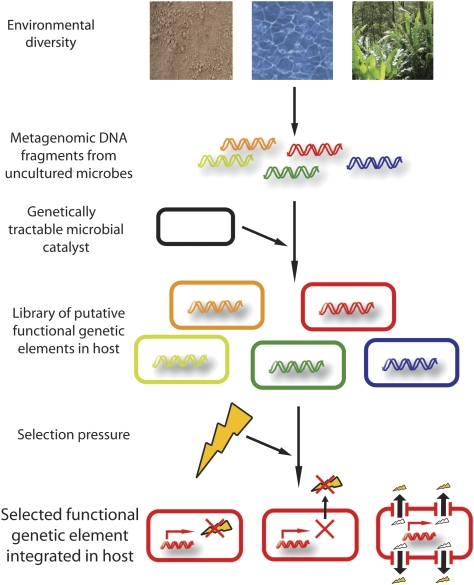 Functional metagenomic platform for discovery of novel functional genetic elements from diverse environmental microbiomes. Shown is a schematic detailing the key steps required for selecting functional genetic elements from diverse environments that confer a desired selective advantage to a microbial catalyst. Metagenomic DNA is directly extracted from arbitrary environmental samples without earlier culturing steps, purified, and transformed into a microbial host of interest. The entire library of putative functional genetic elements is subjected to a selection pressure (e.g. chemicals at inhibitory concentrations or recalcitrant substrates) that only allows survival of hosts containing functional genetic elements, which counteract the selection pressure (e.g. by allowing usage of the recalcitrant substrates or by conferring tolerance by intracellular or extracellular inactivation or efflux of the inhibitory compound). This scheme is ideally suited for discovery of novel functional genetic elements for biomass conversion to biofuels.