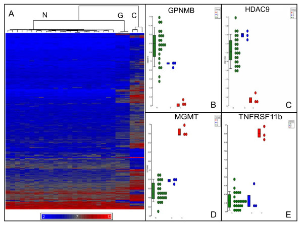 Gene expression profile of trisomic BG01V APCs is similar to glioblastomas . A. Heat map of unsupervised hierarchical cluster analysis of microarray hybridization data derived from the twenty-three glioblastoma patient samples (N), the three trisomic BG01V APC samples (G) and the three diploid H9 APC samples (C). Relative over expression is indicated by red and under expression by blue in the heat map. Data filtered using a p value of
