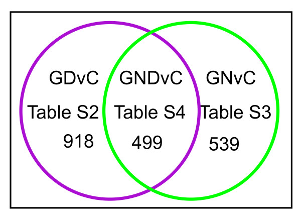 Intersection of microarray data identifies markers of astrocytic cancer cells . Venn diagram depicting the overlap between the two datasets, GDvC (Additional file 2 , Table S2) and GNvC (Additional file 4 , Table S3) that was used to identify the 499 transcripts exhibiting similar changes in expression patterns in all aneuploid astrocytic cell populations including trisomic BG01V APCs (samples G), glioblastoma patients (samples N) and CCF-STTG1 astrocytoma cells (samples D) relative to normal, diploid H9-derived APCs (samples C), which constitutes the GNDvC gene list shown in Additional file 5 , Table S4.