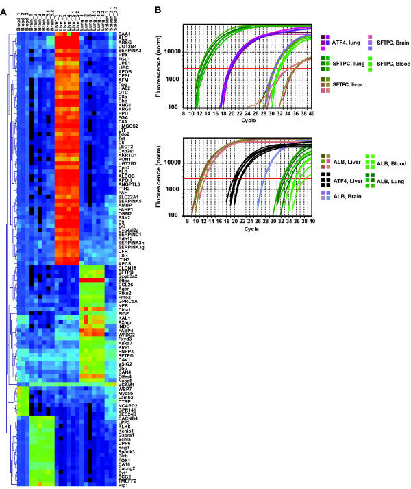 Tissue-specific gene expression . Panel A shows a selection of transcripts identified by ANOVA analysis followed by Pavlidis Template Matching analysis. The genes are clustered according to their expression profile for the analyzed tissues (Pearson correlation, average linkage clustering). The expression value is indicated by a sliding scale, going from black, indicating no expression values, through blue and green to red for the most highly expressed genes. Panel B show the tissue specific expression verification using qRT-PCR of two of the genes showed in panel A: the ferret albumin gene, Alb , and the ferret pulmonary surfactant-associated protein C, Sftpc . The graphs depict the log 2 -transformed curves of the relative fluorescence against cycle number during the qRT-PCR amplification. The analysis was done using RNA extracted from liver, lung, blood and brain, using the Atf4 housekeeping gene as reference. The C(t) threshold line (indicated by a red solid line) is set automatically using the noise band as cut off.