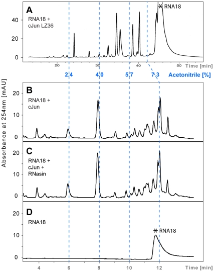 Comparison of chromatograms illustrating RNA18 cleavage by synthetic c-Jun LZ36 and full-length 40 kDa recombinant c-Jun. Reactions were performed in 20 m M Tris-HCl/80 m M KCl, pH 7.2, at 37°C. (A) c-Jun LZ36 (60 µ M ) + RNA18 (170 µ M ); reaction time, 4 h; column, 3.14 mL Nucleosil C-18 300-5 (Macherey Nagel). (B) Recombinant c-Jun (20 µ M ) + RNA18 (90 µ M ); reaction time, 48 h; column, 2.5 mL Eclipse XDB C-18 (Agilent). (C) c-Jun + RNA18 (as in B) in the presence of 1 U of the ribonuclease A inhibitor RNasin. (D) RNA18; incubation time, 48 h. Resolution of the digestion products by the two different HPLC columns required a different gradient set-up (30-mL gradient in panel A versus 13-mL gradient in panels B, C and D). The elution profiles are presented relative to the percentage of acetonitrile in the two gradients (dashed blue lines). Asterisk (*) marks the position of intact RNA18.