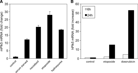 Plk5 expression is induced following different stress stimuli. ( A ) Murine NIH 3T3 cells were either left untreated (control) or treated for 18 h with the DNA damaging agents etoposide (Etop) or HU, the spindle disassembly agent, nocodazole (Noc) or were serum starved (SS). ( B ) Human HEK293 cells were either left untreated (control) or treated with DNA damaging agent etoposide or doxorubicin for 6 or 24 h. The Plk5 mRNA level was measured by qPCR in both cases.