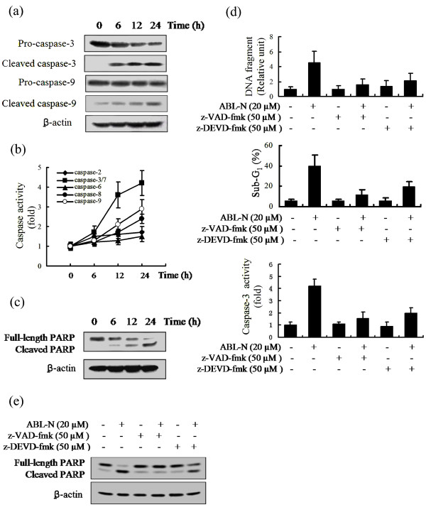 Induction of caspase activities by ABL-N . MDA-MB-231 cells were treated with 20 μM ABL-N for indicated times. (a) Whole cell protein lysates were prepared and subjected to Western blot analysis for detection of cleavage of caspase-3 and caspase-9. (b) Induction of caspase activities by ABL-N in MDA-MB-231 cells. (c) Cleavage of PARP was induced by ABL-N. (d) Cells were pretreated with 50 μM of either z-VAD-fmk or z-DEVD-fmk for one hour, followed by 20 μM ABL-N for 24 hours, and caspase-3 activity, DNA fragmentation and sub-G 1 DNA contents were determined. The data are expressed as means ± SE of three separate experiments. (e) Abrogation of PARP cleavage by caspase inhibitors.