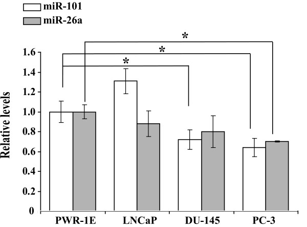 Analysis of miR-101 and miR-26a expression in prostate cancer cell lines . RT-PCR was conducted using RNAs extracted individually from PWR-1E, LNCaP, DU-145 and PC-3 cells with a stem-loop primer specific to miR-101 or miR-26a. The generated cDNAs were subjected to further analysis by Taqman Real-Time PCR using FAM-labeled miR-101 or miR-26a probes (Applied BioSystems). Each sample was analyzed in triplicates. The data are presented as an average of two experiments and normalized to the expression of the endogenous U6 RNA using the ΔΔC T method [ 28 ] as described in Materials and Methods. Student T-test was used to determine statistical significance and the asterisks indicate that the p values are not higher than 0.05.