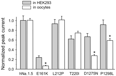 """A comparison of normalized peak current amplitudes for wild-type and mutant hNa v 1.5 channels expressed by <t>two</t> different expression systems. Whole-cell currents were recorded by the patch <t>clamp</t> <t>technique</t> (HEK293 cells) and by the <t>two-microelectrode</t> <t>voltage</t> clamp technique (oocytes) as described in """" Methods """". L212P and T220I exhibited similar relative expression levels in both systems. With E161K, D1275N, and P1298L, whole-cell currents, normalized to hNa v 1.5 values, were significantly smaller for the oocyte system (* indicates p"""