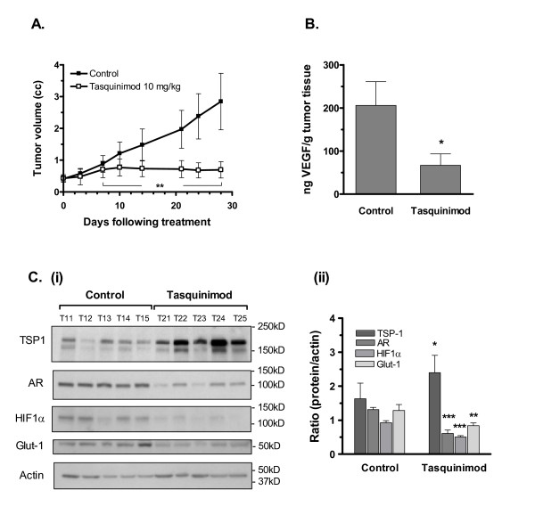 Tasquinimod blocks the angiogenic switch in CWR-22RH tumors . Inhibition of the