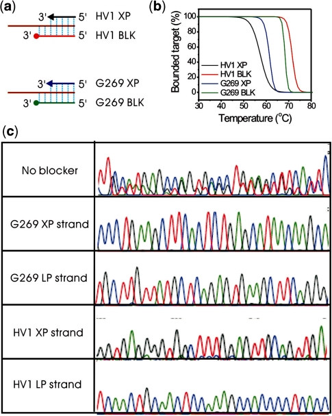 Obtaining both LP strand and XP strand of G269 and HV1 from their LATE-PCR duplex by Dilute-'N'-Go sequencing. ( a ) blocker design of the G269 BLK, G269_BL and HV1 BLK, HV1_BL; ( b ) the binding curve of each XP and BLK on its specific target and ( c ) sequencing results from the G269 and HV1 duplex by Dilute-'N'-Go sequencing methods.