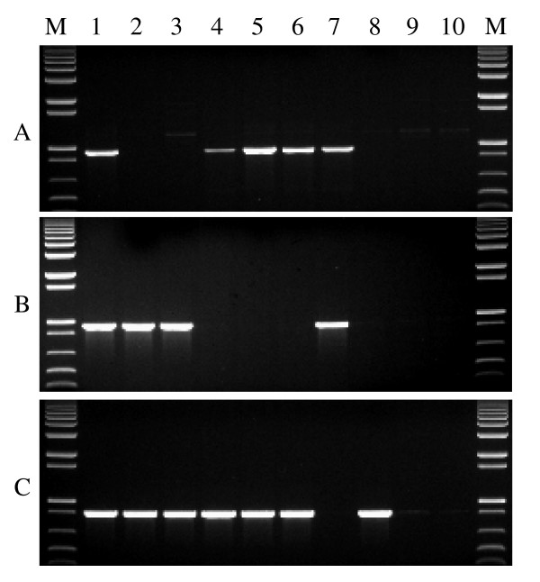 PCR amplification for distinguishing null alleles of the waxy genes and wild type in wheat . (A) PCR results with primer set Wx-7A-F1 and Wx-7A-R1a to distinguish the wild type ( Wx-A1a ) and null allele ( Wx-A1b ) of the Wx-A1 gene. (B) PCR results with primer set Wx-7B-F2 and Wx-7B-R2 to distinguish the wild type ( Wx-B1a ) and null allele ( Wx-B1b ) of the Wx-B1 gene. (C) PCR results with primer set Wx-7D-F3 and Wx-7D-R3a to distinguish the wild type ( Wx-D1a ) and null allele ( Wx-D1b ) of the Wx-D1 gene. M = 1 kb plus DNA ladder. Lanes: 1, CS; 2, Sturdy; 3, Fujimi Komugi; 4, Gabo; 5, Gamenya; 6, Santanta; 7, Bai Huo; 8, Kanto 107; 9, NSGC 8645; 10, NSGC 8646.