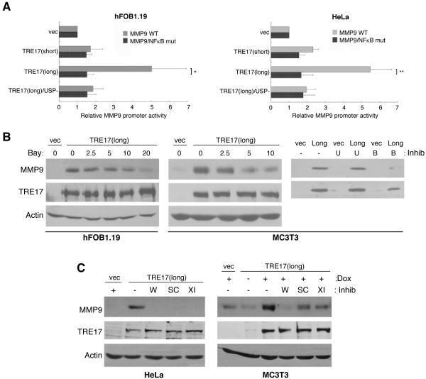 NFκB is required for induction of MMP-9 by TRE17 A) hFOB1.19 or HeLa cells were transfected with the indicated TRE17 constructs and either a luciferase reporter driven by the WT MMP-9 promoter, or a mutant in which the NFκB response element was ablated. Luciferase assays were performed; data represent the mean ± SD of 4 experiments (*, p