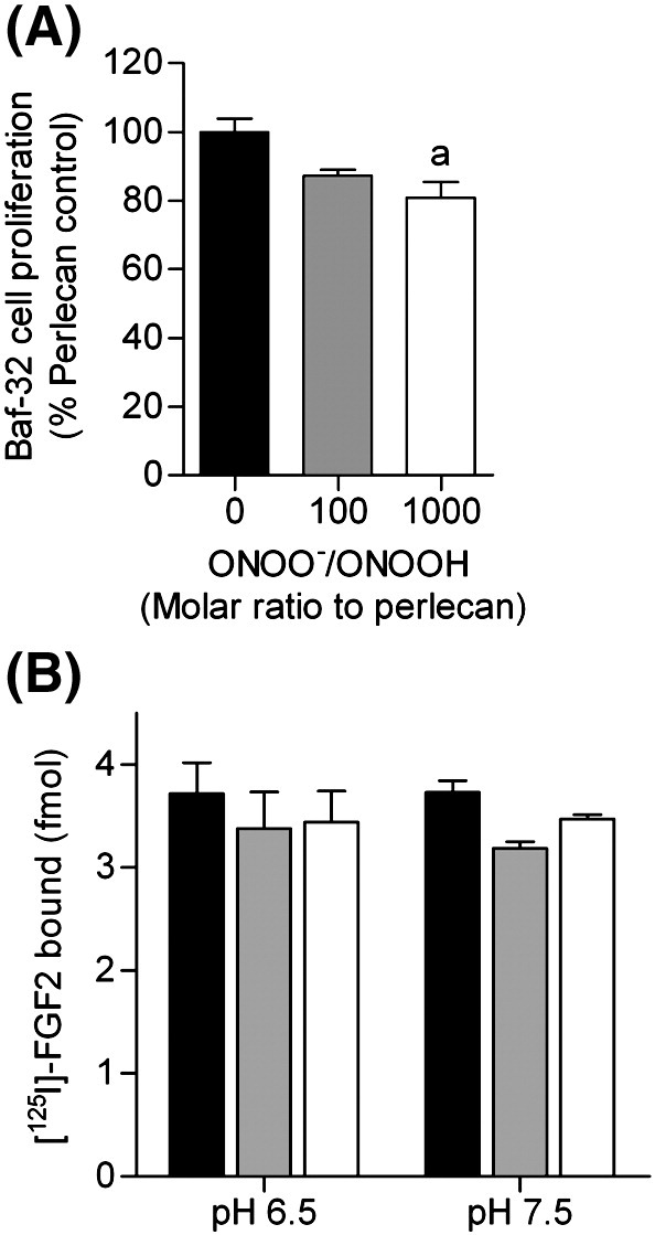 Effect of perlecan modification by peroxynitrite on Baf-32 cell proliferation and binding of FGF-2. (A) BaF3 cells (expressing FGF receptor 1c) were incubated with perlecan and FGF2 and the relative amount of growth was measured as described in the methods section. (B) Surface absorbed perlecan (32 nM, black bars) was exposed to peroxynitrite (ONOO, 32 μM, white bars) or dONOO (32 μM, light grey bars) in 0.1 M phosphate buffer, pH 6.5 or pH 7.5 for 20 min at 22 °C. The extent of [ 125 I]-labeled FGF-2 binding after 2 h incubation at 22 °C was quantified by gamma counting. a significantly different to untreated perlecan control.