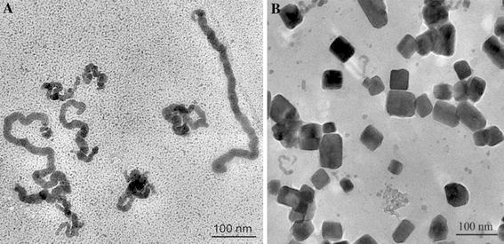 TEM images of BSA–CuSe nanosnakes ( a ) and the cubic copper selenide nanostructures ( b )