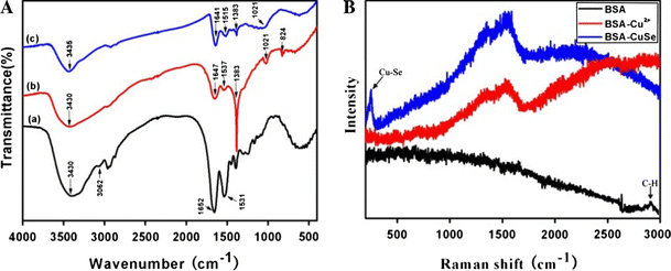 a The FT-IR spectra of ( a ) pure BSA, ( b ) BSA–Cu 2+ , and ( c ) BSA–CuSe in BSA solution for 96 h. b Raman spectra (632.8 nm excitation) of pure BSA, BSA–Cu 2+ , BSA–CuSe in BSA solution for 96 h