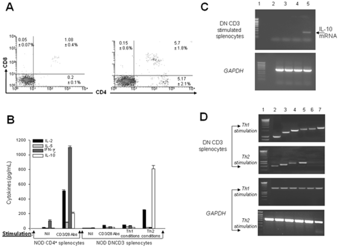 Cytokines and transcriptional events in NOD DNCD3 splenic cells. The DN splenic cells and mature, splenic CD4 + T-cells from a pool (n = 10) of 14 day-old female mice were negatively-selected on mouse CD4/CD8 tandem columns at 95% purity according to FACS analysis. Cells (1×10 6 ) were stimulated or not for 1, 3, or 5 days with a mixture of soluble CD3/CD28 Abs (2.5 µg each), or with CD3/CD28 mAbs in Th1 or Th2 conditioned medium, as described. The one-day stimulation assay was used to measure the IL-2 secretion in the culture medium. Panel A , DN splenic cell cultures stimulated under Th1 ( left panel ) and Th2 ( right panel ) conditions, then stained 3 days later with CD4 Ab-APC and CD8 Ab-PerCP, and analyzed by FACS. Shown is the mean values (%) of CD4 − 8 + cytotoxic, CD4 + 8 + double positive, and CD4 + 8 − single positive T-cells from duplicate cultures ± SD. Panel B , mean values of cytokines measured in duplicate wells by ELISA in the same DNCD3 cell cultures (pg/mL ± SD) described in panel A . Panel C , mRNA extracted 3 days after stimulation of aliquot DNCD3 cell cultures like in panels A B , and amplified in RT-PCR using specific primers for IL-10. In the upper panel, lane 1, molecular markers; lane 2, non-stimulated cells after 1 day of culturing in medium alone; lane 3, CD3/CD28 stimulated cultures; lane 4, cell cultures stimulated in Th1 conditioned medium; and lane 5, cell cultures stimulated in Th2 conditioned medium. Lower panel shows the corresponding GAPDH mRNA amplicons for the corresponding samples analyzed in the upper panel for IL-10 mRNA expression. Panel D , mRNA extracted 3 days after stimulation from aliquot DNCD3 cell cultures like in panels A B , and amplified in RT-PCR using specific primers for the major Th1 and Th2 transcription factors ( lane 1 , molecular markers, lane 2 , STAT6; lane 3 , GATA-3; lane 4 , cMAF; lane 5 , NF-ATc; lane 6 , STAT4, and lane 7 , T-bet). Lower panel shows the corresponding GAPDH mRNA amplicons for each tra