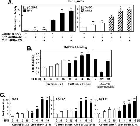 """Knockdown of CRIF1 on NRF2-, t -BHQ-, or SFN-induced gene expression. A, endogenous CRIF1 levels limit the ability of the HO-1 reporter plasmid to respond to inducing treatments. Cells pretreated with siRNA (control, CRIF1–263, or -379) for 48 h were transfected with the DNA plasmid as indicated for 16 h and harvested for luciferase ( Luc ) analysis ( left-hand bar graph ). Next, cells were transfected similarly as in the left panel (but without NRF2) and then exposed for an additional 24 h to either DMSO or 100 μ m of t -BHQ before measuring the luciferase activity ( right-hand bar graph ). The luciferase activities in all figures were normalized to the value obtained with the empty expression plasmid control, unless otherwise indicated or as described under """"Experimental Procedures,"""" and are presented as mean luciferase activity ± S.E. of n = 4 wells. A representative of three independent experiments that yielded similar results is shown in each panel. * means p"""