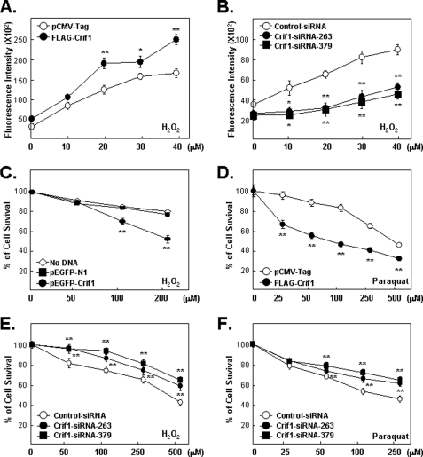 """CRIF1 regulates ROS accumulation and cell sensitivity to oxidative stress. A, CRIF1 overexpression increases ROS accumulation. ROS accumulation in MCF-7 cells transfected for 24 h and then treated with various doses of H 2 O 2 for 24 h was measured as described under """"Experimental Procedures."""" B, CRIF1 knockdown decreases ROS accumulation. ROS levels in MCF-7 cells transfected for 48 h and then treated with H 2 O 2 for 24 h were measured as in A. C–F, CRIF1 affects the ability of the cell to survive oxidative stress. C and D, MCF-7 cells transfected with GFP-CRIF1 or FLAG-CRIF1 ( versus empty vectors, pEGFP-N1 or pCMV-Tag) for 24 h and then treated with H 2 O 2 for 24 h ( C ) or paraquat for 72 h ( D ) were assayed for viability by standard MTT assays. Values are presented as means ± S.E. of cell viability in 10 replicate wells relative to the untreated controls (no DNA or empty vector and no killing agents). The results shown are representative of three independent experiments. E and F, cells (MCF-7) pretreated with the indicated siRNAs (control versus CRIF1–263 or -379) for 48 h were treated with H 2 O 2 for 24 h ( E ) or paraquat for 72 h ( F ) when MTT assays were done."""