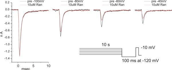 Voltage-dependence of ranolazine block: Example traces . The voltage-dependence of ranolazine block was determined by utilizing a ten-second conditioning pulse protocol as described in Methods. After the protocol was performed once (black traces), the cells were exposed to a single concentration of ranolazine and then the protocol was repeated (red traces). These data traces were obtained from an HEK + hNav1.7r-L858H expressing cell treated with 10 μM Ranolazine. The fraction of ranolazine block was determined at each conditioning potential by dividing the peak current in the presence of ranolazine by the baseline peak current.