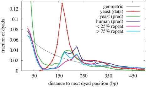 Distribution of distances between successive nucleosome dyad positions. The distributions shown here were derived from Field et al. [4] S. cerevisiae data (red), and from genome-wide model predictions in S. cerevisiae (green), and in H. sapiens (dark blue). The predicted dyad positions in H. sapiens are also shown partitioned according to the fraction of the neighboring 200 bases that are marked as repetitive ( 25% repeat in pink, and 75% repeat in aqua). For the purposes of this analysis, a predicted dyad position is a local maximum in the dyad score trace. The grey line shows the geometric distribution resulting from random positions with an average spacing of 165 bp.