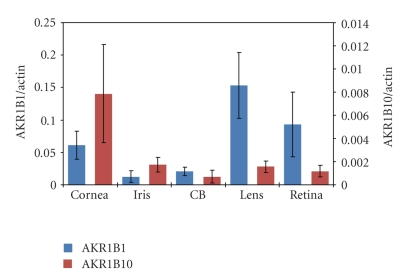 Expression of AKR1B1 and AKR1B10 in human eye tissues. Gene transcript levels were measured by quantitative real-time PCR as described in Section 2 . Data are mean ± SD among 5 nondiabetic male donors aged 65. ± 9.2 years. Data for AKR gene transcripts levels are normalized to RT-PCR for β -actin.