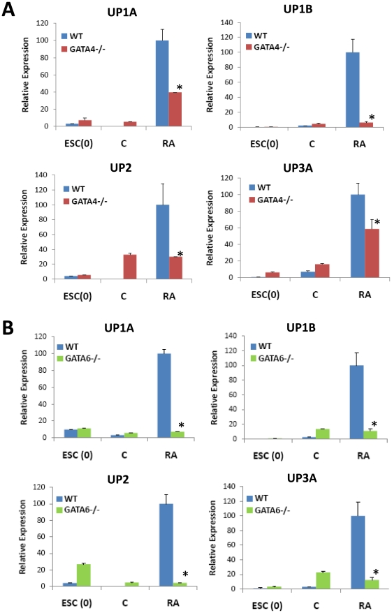 GATA4 and GATA6 are crucial signaling molecules in RA-mediated upregulation of UP expression in ESCs. Real time RT-PCR analysis of uroplakin expression in WT, GATA4−/− [ A ] or GATA6−/− [ B ] ESCs cultured in the presence (+RA) or absence (C) of 10 µM RA for up to 9 d. ESC(0) = undifferentiated ESCs. Levels normalized to GAPDH expression. Mean ± SD per data point. N = 3–4 per data point. (*) = p
