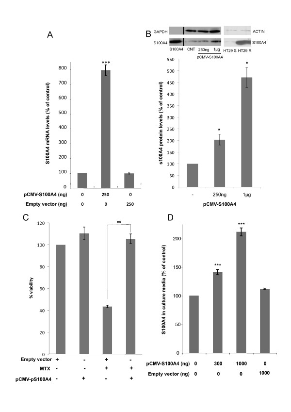 Effects on S100A4 expression and MTX sensitivity upon pCMV-S100A4 transfection of HT29 cells . A) mRNA levels of S100A4 determined by RT-Real-Time PCR 48 h after treatment of HT29 cells (30,000) with 250 ng of the expression vector for S100A4 (pCMV-S100A4). B) A representative image of the intracellular protein levels of S100A4 determined by Western Blotting 72 h after ectopic transfection with its expression vector is shown in the upper panel, and the quantification of the blots is shown in the lower panel. Purified S100A4 protein was used as a reference marker (Abnova; first lane). An additional panel showing endogenous S100A4 protein levels in HT29 sensitive (S) and resistant (R) cells is also provided. C) Effects of S100A4 overexpression on cell viability. HT29 cells (100,000) were treated with 1 μg of pCMV-S100A4 and 5 × 10 -8 M MTX was added 48 h later. Cell viability was assessed by the MTT assay six days after MTX treatment. D) Extracellular S100A4 protein levels quantified by ELISA 72 h after S100A4 overexpression upon pCMV-S100A4 transfection. The expression and viability results are expressed as percentages referred to the untreated cells. Values are the mean of three independent experiments ± SE. *p