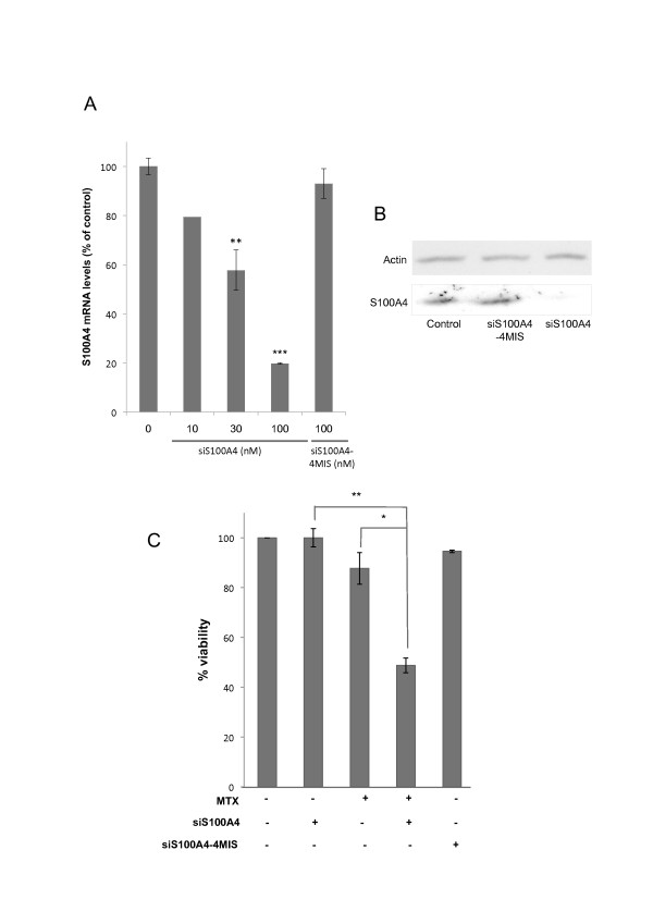 Effects on <t>S100A4</t> expression and MTX sensitivity upon siS100A4 transfection of HT29 cells . A) HT29 cells (30,000) were transfected with siS100A4 as described in Methods. Total RNA was extracted after 48 h and S100A4 mRNA levels were determined by RT-Real-Time PCR. B) S100A4 protein levels were determined by Western Blotting 72 h after transfection, using specific antibodies against S100A4 and Actin to normalize the results. C) Chemosensitization assays toward methotrexate: cells were treated with siS100A4 for 48 h and then incubated with MTX. Cell viability was determined 3 days after MTX treatment. The expression and viability results are expressed as percentages referred to the untreated cells. Values are the mean of three independent experiments ± SE. A representative image of Western Blots is presented. *p