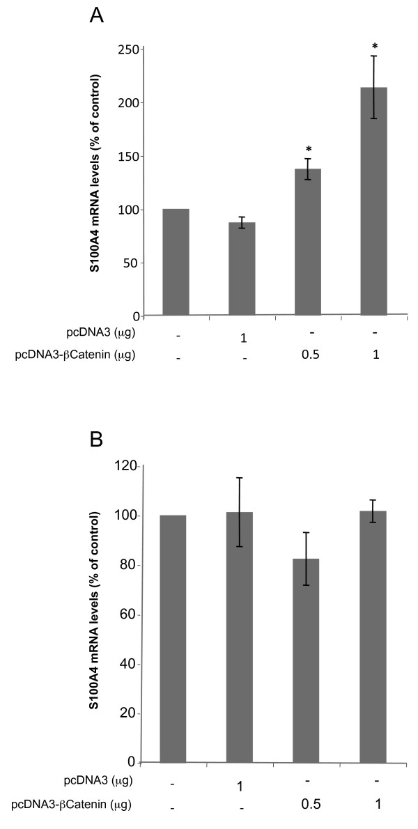 Effects of transfecting an expression vector encoding for β-Catenin on S100A4 mRNA levels . Transfection with β-Catenin expression vector (pcDNA3-β-Catenin) was performed in HT29 cells, both sensitive (Figure 4A) and resistant (Figure 4B) as described in Methods. S100A4 mRNA levels were determined by RT-Real-Time PCR 48 h after transfection. All results are expressed as percentages referred to untreated cells. Values are the mean of three independent experiments ± SE. * p