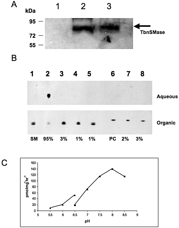 Expression, purification and activity of recombinant Tb <t>nSMase.</t> A. Tb nSMase was cloned and expressed as an N-terminal <t>GST</t> fusion protein in C43 E. coli . Protein samples after cell disruption were separated on a 10% SDS-PAGE gel, transferred to membrane and detected with anti-GST antibody. Lane 1, soluble protein (supernatant from 100 000 g ); lane 2, membrane fraction (pellet from 100 000 g ); lane 3, insoluble fraction (pellet from 45 000 g ). B. The substrate [ 3 H]-sphingomyelin (SM) and the product [ 3 H]-choline–phosphate of the Tb nSMase assay were separated by phase partitioning (organic and aqueous respectively), analysed by HPTLC and detected by autoradiography as described in Experimental procedures . Lane 1, negative control, [ 3 H]-SM with no membranes; lane 2, [ 3 H]-SM with Tb nSMase; lane 3, [ 3 H]-SM with Tb nSMase in presence of EDTA (5 mM); lane 4, negative control, [ 3 H]-SM with non expressing Tb nSMase membranes; lane 5, [ 3 H]-SM with non-expressing Tb nSMase membranes and EDTA (5 mM).; lane 6, [ 3 H]-PC with no membranes; lane 7, [ 3 H]-PC with Tb nSMase; lane 8, [ 3 H]-PC with Tb nSMase in the presence of EDTA (5 mM). Percentages of substrate turnover are shown, as determined by densitometry (ImageJ software). C. Tb nSMase activity was determined by end-point radioactive assay as a function of pH, using with MES buffer (filled triangles) or Bis-Tris Propane (filled squares) as described in Experimental procedures.