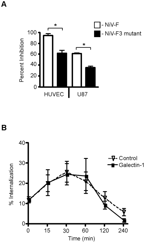 The F3 glycan is critical for galectin-1 inhibition of NiV-F maturation and function. A , The F3 mutant (NiV-F missing the F3 glycan) is resistant to galectin-1 inhibition of syncytia formation in endothelial and glial cells, using the heterologous cell fusion assay described in Fig. 1 . PK13 cells expressing NiV-G and either wildtype NiV-F (white) or NiV-F lacking the F3 glycan (black) were added to indicated cells in the presence of galectin-1 (HUVEC, 10µM; U87, 20µM). The y-axis shows percent inhibition of fusion. Data are mean ± SD of triplicate samples from one of three replicate experiments. * p = 0.0001, calculated using unpaired Student's t test. B , The F3 glycan on NiV-F is critical for galectin-1 inhibition of NiV-F 0 internalization. Cells transfected with NiV-F3 (lacking the F3 glycan) were cell surface biotinylated and incubated in the presence of galectin-1 (20µM) (bold line), or buffer control (dashed line), for the indicated times to allow internalization. Internalized NiV-F3 was quantified as in Fig. 4 . Data are mean ± SEM for seven replicate experiments.