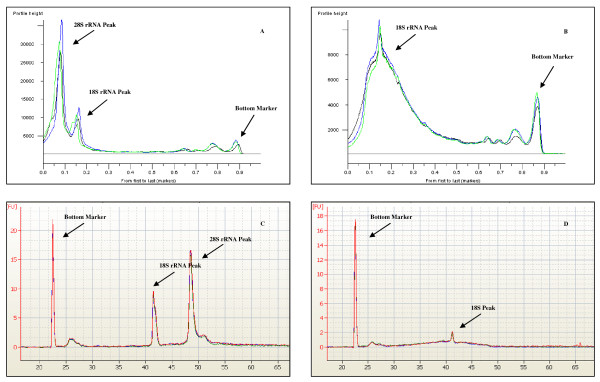 SDV and RIN chromatograms . Graphical overlay of SDV chromatograms for the analysis of intact (A), and degraded (B) RNA. RIN chromatograms for intact (C) and degraded (D) RNA are shown for comparison.