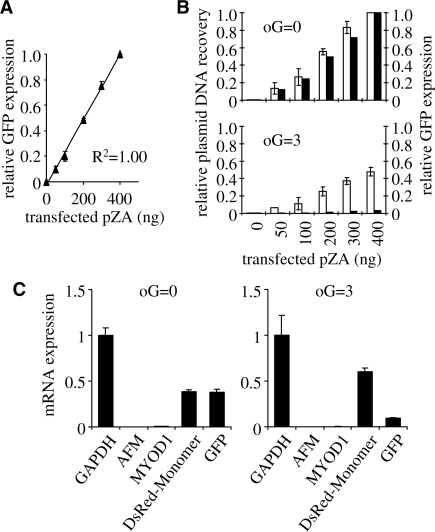Plasmid survival and reporter gene expression in HeLa cells. The cells were transfected with 400 ng pDsRed plasmid (non-damaged reference) together with the indicated amounts of pZA plasmids (non-damaged or damaged, as specified). ( A ) Relative GFP fluorescence as a function of the amounts of non-damaged pZA plasmid used for transfection. Means of three independent experiments (±SD). ( B ) Comparison of DNA amounts recovered from the cells (open columns) and GFP protein expression (black columns) for the range of transfection inputs of the non-damaged (oG = 0) and damaged (oG = 3) pZA plasmid. All values are expressed relative to the values obtained after transfection with 400 ng of undamaged pZA plasmid. ( C ) Messenger RNA expression 24 h after transfections with non-damaged (oG = 0) and damaged (oG = 3) pZA plasmids. cDNA copy numbers (mean and data range) were determined by real-time PCR relative to the copy numbers of DNA recovered from the transfected cells. Mean GAPDH cDNA copy number is used for normalisation between the samples (duplicates).