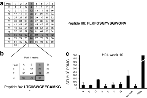 Analysis of canine FIX (cFIX) peptide pools which showed reactivity in the IL-10 ELISpots. ( a ) A peptide library of 89 peptides spanning the sequence of cFIX was organized into a matrix in which each peptide was represented in two orthogonal pools. Highlighted in grey are the pools that scored positive in most of the dogs analyzed. Positivity in two orthogonal pools identified a single stimulatory peptide, peptide 68. Peptide 68 amino acid sequence is indicated. ( b ) Peptides contained in pool 4 were rearranged into a smaller orthogonal matrix, allowing the identification of another reactive peptide that spanned the Chapel Hill mutation (peptide 84). *Chapel Hill mutation (glycin→glutamic acid) within peptide 84. ( c ) IL-10 secretion detected by ELISpot in PBMCs obtained form H24 (group C, ATVRX, 8.5 × 10 12 vg/kg with IS) stimulated with the matrix represented in b . ELISpot, enzyme-linked immunosorbent assay; IL, interleukin; PBMC, peripheral blood mononuclear cell.
