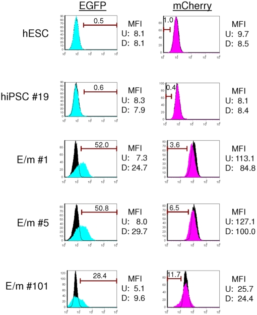 hiPSCs transduced with the reporter vector containing miRNA targets show differentiation-specific reporter expression in EBs. hESC (H1) and 4 different hiPSC clones (E/m#1, E/m#5, E/m#101, and hiPSC#19) were differentiated into EBs and maintained 25 days in IMDM containing 10% FBS. EBs were then dissociated with 0.25% trypsin/EDTA and the reporter expression was analyzed by flow cytometry. Histograms filled with black are undifferentiated controls. Histograms filled with blue (EGFP) and pink (mCherry) are differentiated cells, respectively. The numbers indicated in histogram show percentage of positive cells (EGFP) and negative cells (mCherry). MFI: mean fluorescence intensity. U: MFI of undifferentiated cells. D: MFI of differentiated cells.
