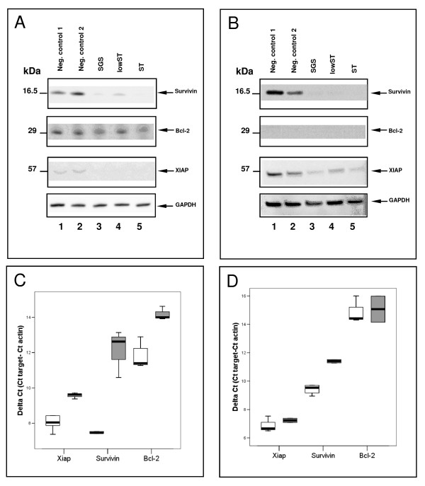 Gene-silencing of Bcl-2, Survivin and XIAP . Western blot showed efficient silencing in transfected MiaPaCa-2 ( A ) and AsPC-1 cells ( B ). 50,000 cells/well were single-transfected with carrier solution (lane 1) and siRNA against Luciferase (lane 2) as control. SGS, lowST and ST all effectively silenced the three target genes (lane 3-5). Efficient knock-down was also shown in the lowST group by RT-PCR in MiaPaCa-2 ( C ) and AsPC-1 cells ( D ). White bars show controls, grey bars signify transfected cells. All samples were normalized to β-Actin as a house-keeping gene. SGS = Simultaneous gene silencing; lowST = Low dose siRNA transfection; ST = Standard dose siRNA transfection.