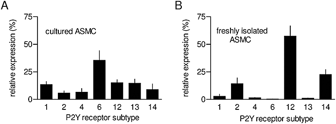 Expression of P2Y receptor subtypes in aortic smooth muscle cell (ASMC). Quantitative PCR was used to measure relative levels of mRNA encoding the subtypes of P2Y receptors in either cultures of ASMC (A, passage 3–7) or in freshly isolated ASMC (B). Results, expressed as percentages of total mRNA encoding P2Y receptors, are means ± SEM from three experiments, each performed in duplicate.