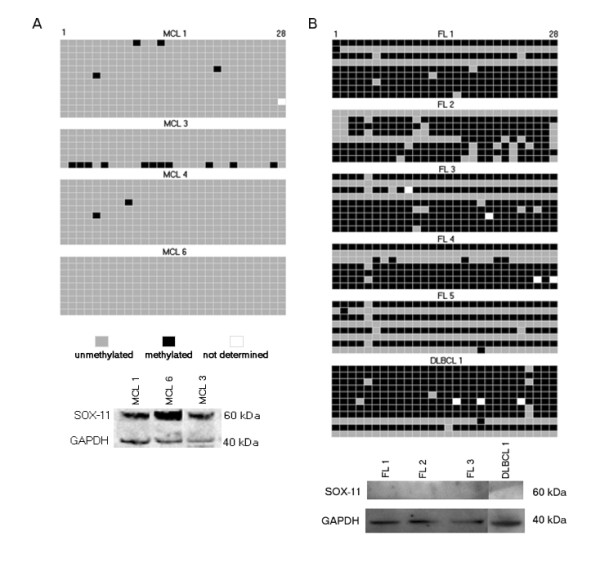 SOX11 DNA methylation and protein expression in primary lymphoma samples . Methylation patterns of SOX11 promoter in clinical specimens was determined by bisulfite sequencing of individual alleles and correlated to SOX11 protein expression. Every row represents a unique allele and the columns represent a potentially methylated CpG site. a) In MCL samples, the promoter stays unmethylated and SOX11 is detectable. b) The lack of SOX11 protein in FL and DLBCL is accompanied by 50-100% methylated alleles.