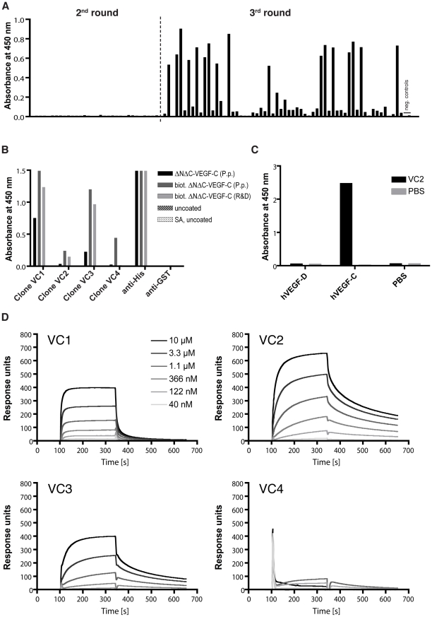 Binding specificities of anti-VEGF-C scFv. (A) ELISA screening of random clones obtained after 2 or 3 rounds of panning against ΔNΔC-VEGF-C. (B) ELISA analysis of representative anti-VEGF-C scFv clones for the 4 different amino acid sequences obtained. Maxisorp or streptavidin-precoated (SA) plates were coated with his-tagged human ΔNΔC-VEGF-C derived from P. pastoris or biotinylated his-tagged human ΔNΔC-VEGF-C from mammalian cells or P. pastoris , respectively. Control surfaces were left untreated. Antibody fragments and control antibodies were subsequently added and the ELISA was developed as described in Materials and Methods. (C) Cross-reactivity tested by ELISA. Human ΔNΔC-VEGF-C orΔNΔC-VEGF-D (both from mammalian cells) were coated on a maxisorp plate. Anti-VEGF-C scFv clone VC2 or a negative control (PBS only) was added and the ELISA was developed as described in Materials and Methods. (D) BIAcore profiles from the 4 different anti-VEGF-C scFv clones. Different concentrations of protein-A purified scFv were injected on a streptavidin-precoated sensorchip coated with ca. 2000 RU biotinylated mammalian cell-derived ΔNΔC-VEGF-C.